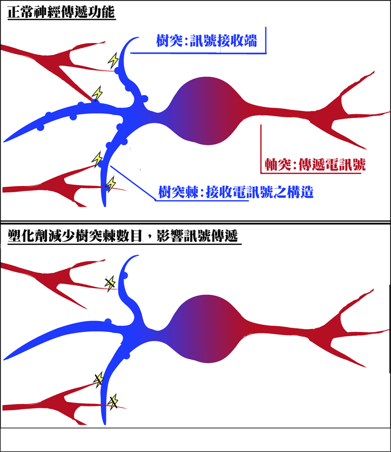 neuron transmission and plasticiser.jpg