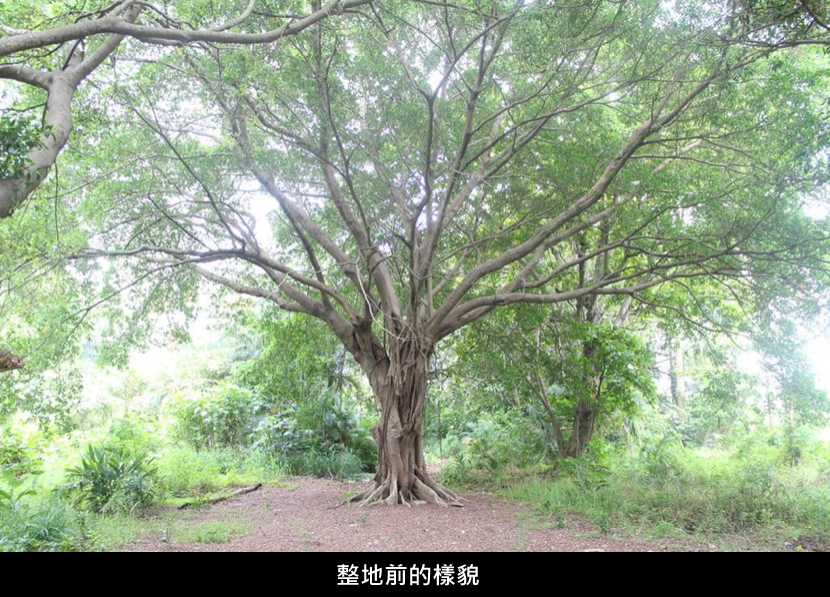 20151102tree1.png