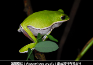 20151102 tree frog