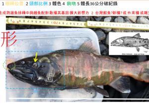 20161109deformed_fish