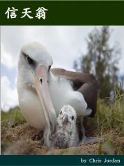 albatross_movie_poster.jpg